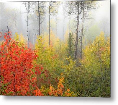 Autumn Silence Metal Print by Leland D Howard