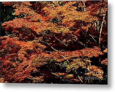 Metal Print featuring the digital art Autumn Solarisation 1 by Rudi Prott