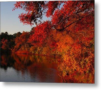 Autumn Splendor  Metal Print by Dianne Cowen