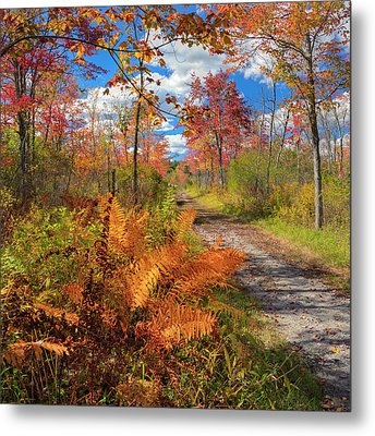 Autumn Splendor Square Metal Print by Bill Wakeley