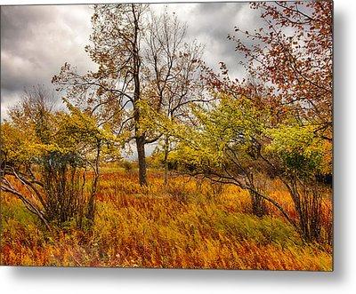Autumn Storm At Dolly Sods West Virginia I Metal Print by Dan Carmichael