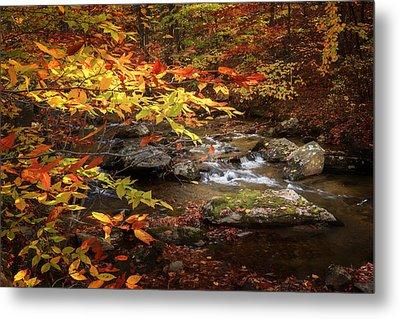 Autumn Stream Metal Print by Bill Wakeley