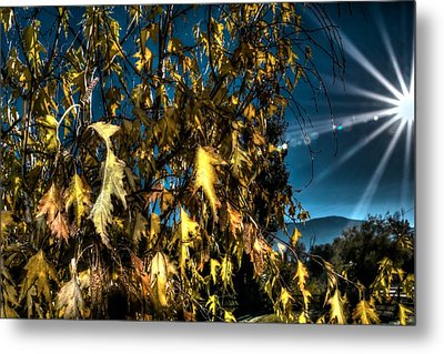 Metal Print featuring the photograph Autumn Sun by Kevin Bone