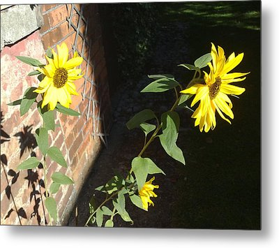 Autumn Sunflowers Metal Print by Tis Art