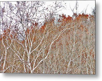 Metal Print featuring the photograph Autumn Sycamores by Bruce Patrick Smith