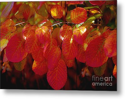 Autumn Metal Print by Sylvia  Niklasson