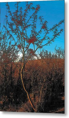 Autumn Metal Print by Terry Reynoldson