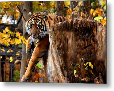 Autumn Tiger Metal Print by Elaine Manley