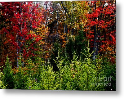Autumn Tree Foliage Metal Print by Lanjee Chee