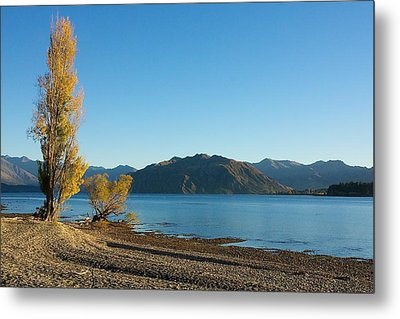 Autumn Trees At Lake Wanaka Metal Print by Stuart Litoff