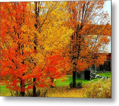 Metal Print featuring the photograph Autumn Trees By Barn by Rodney Lee Williams