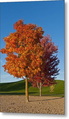 Autumn Trees Metal Print by Celso Bressan