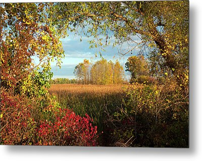 Autumn Trees Metal Print by Jim West