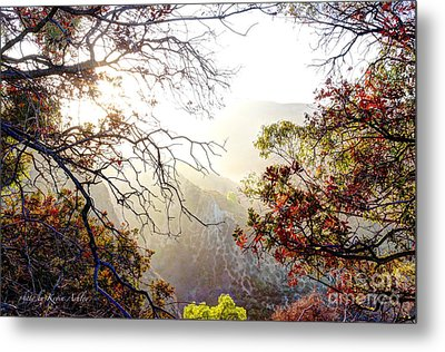 Autumn Trees Metal Print by Kevin Ashley
