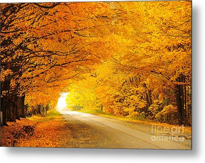 Autumn Tunnel Of Gold 8 Metal Print