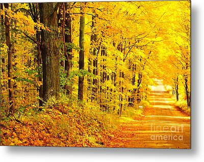 Autumn Tunnel Of Trees 36 Metal Print by Terri Gostola