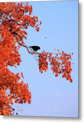 Autumn View Through Red Leaves Metal Print by Gothicrow Images