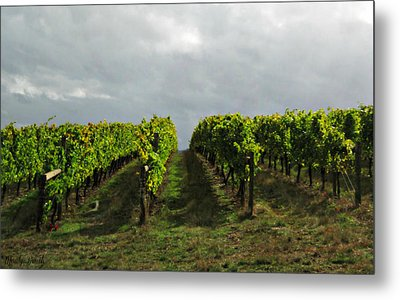 Metal Print featuring the photograph Autumn Vineyard by Mindy Bench