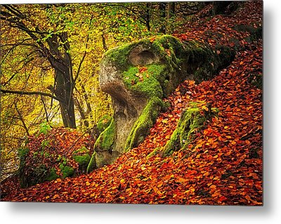 Autumn Walk In Forrest Metal Print