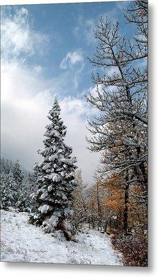 Autumn Winter Colors 2 Metal Print