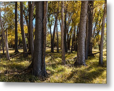 Autumn Wood Metal Print