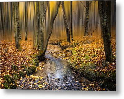 Autumn Woodland Metal Print by Ian Hufton