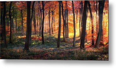 Autumn Woodland Sunrise Metal Print by Photokes