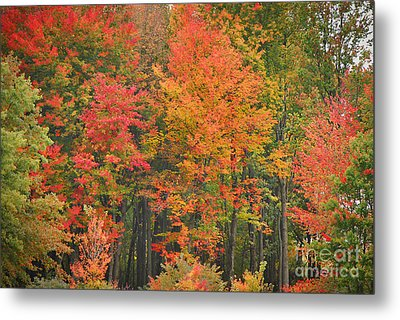 Autumn Woods Metal Print by Mary Carol Story