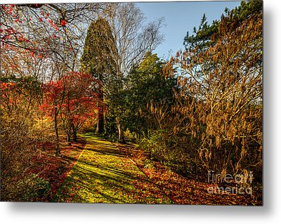 Autumnal Forest Metal Print by Adrian Evans