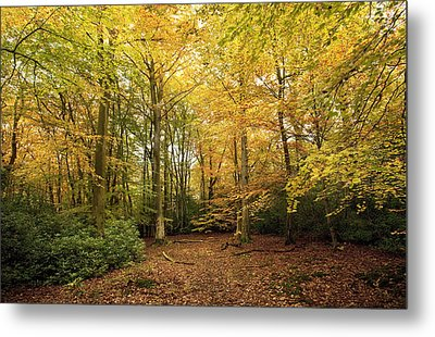Autumnal Woodland I Metal Print by Natalie Kinnear