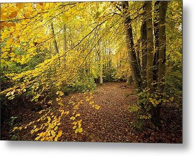 Autumnal Woodland II Metal Print