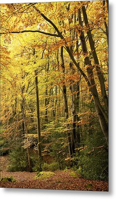 Autumnal Woodland Iv Metal Print by Natalie Kinnear