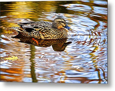 Autumns Brilliance Metal Print by Frozen in Time Fine Art Photography