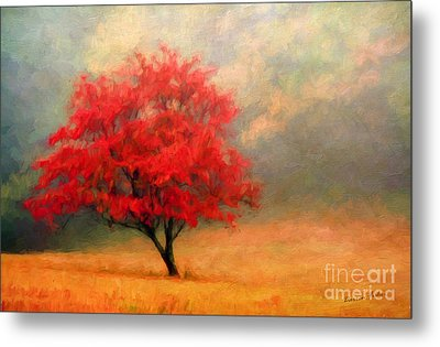 Autumns Colors Metal Print by Darren Fisher