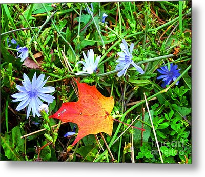 Metal Print featuring the photograph Autumns First Leaf by Jackie Carpenter
