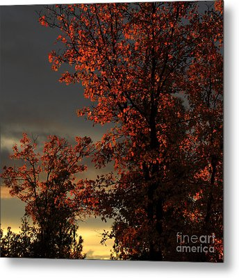Autumn's First Light Metal Print by James Eddy