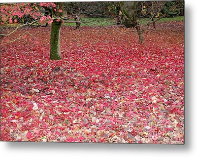 Autumn's Gift Metal Print by Linda Prewer