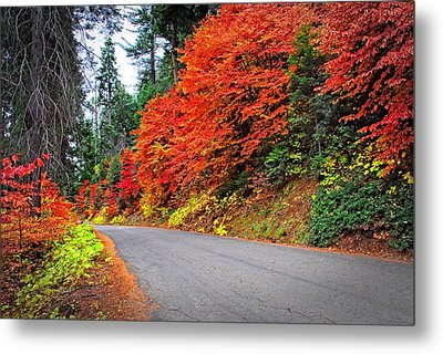 Metal Print featuring the photograph Autumn's Glory by Lynn Bauer