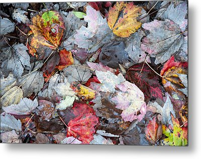 Autumn's Leaves Metal Print by Allen Carroll