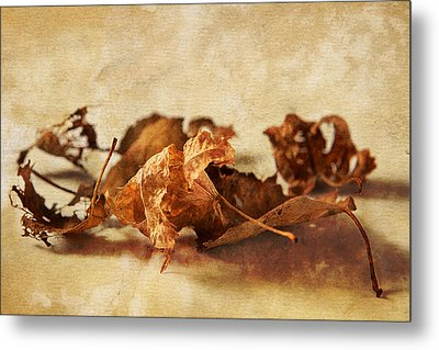 Autumn's Leavings Metal Print by Caitlyn  Grasso