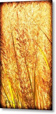 Autumns Passion Metal Print by Bob Orsillo