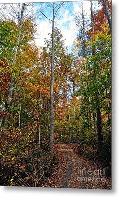 Autumn's Path Metal Print by Gina Savage