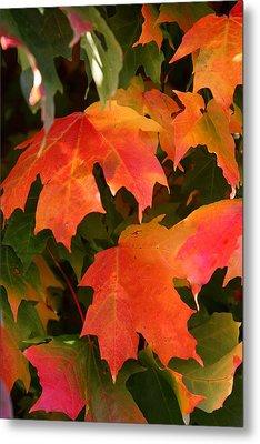 Autumn's Peak Metal Print by Paula Tohline Calhoun