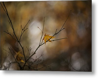 Autumns Solitude Metal Print by Mike Reid