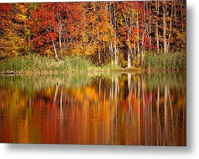 Autumns True Colors Metal Print by Karol Livote