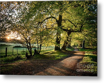 Avenue Of Light Metal Print by Tim Gainey