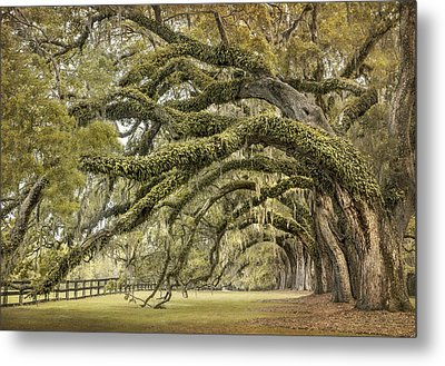 Avenue Of Oaks Metal Print by Magda  Bognar