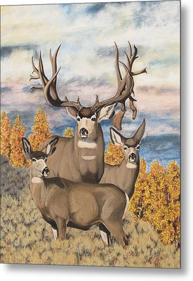 Avery Buck Metal Print