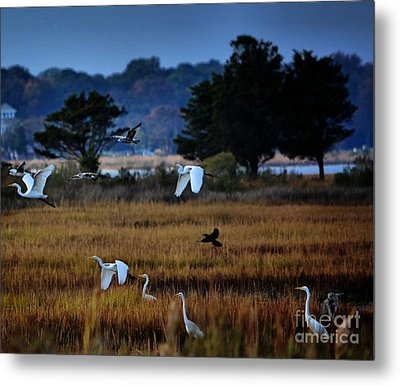 Aviary Convention Metal Print by Robert McCubbin