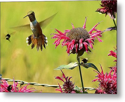 Metal Print featuring the photograph Aw Buzz Off by Julia Hassett